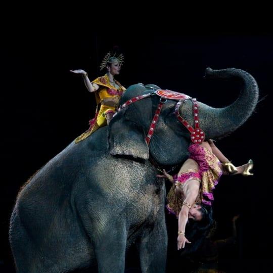 Despre animalele exploatate în circuri