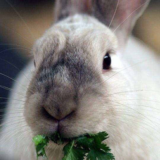 Despre testarea pe animale