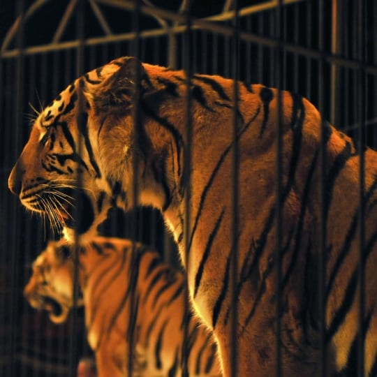 Despre animalele exploatate la zoo