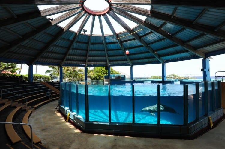 Imagine delfin singuratic în bazin
