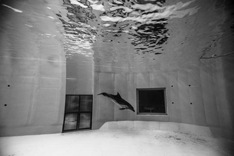 Delfin singuratic într-un delfinariu din Lituania