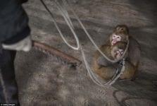 Cruzime impotriva animalelor la circ