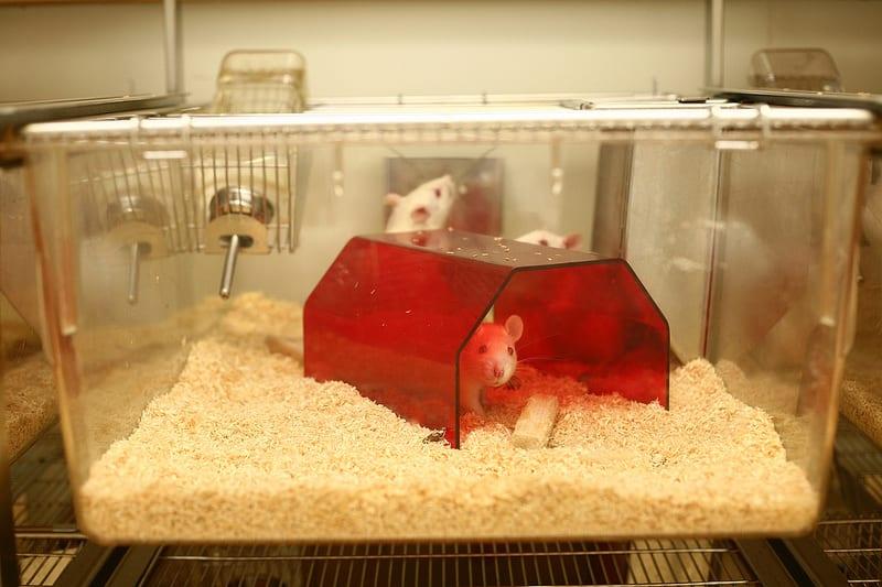 95% din animalele exploatate în laboratoare sunt șoareci și șobolani conform Fundației pentru cercetare biomedicală (Foundation for Biomedical Research).