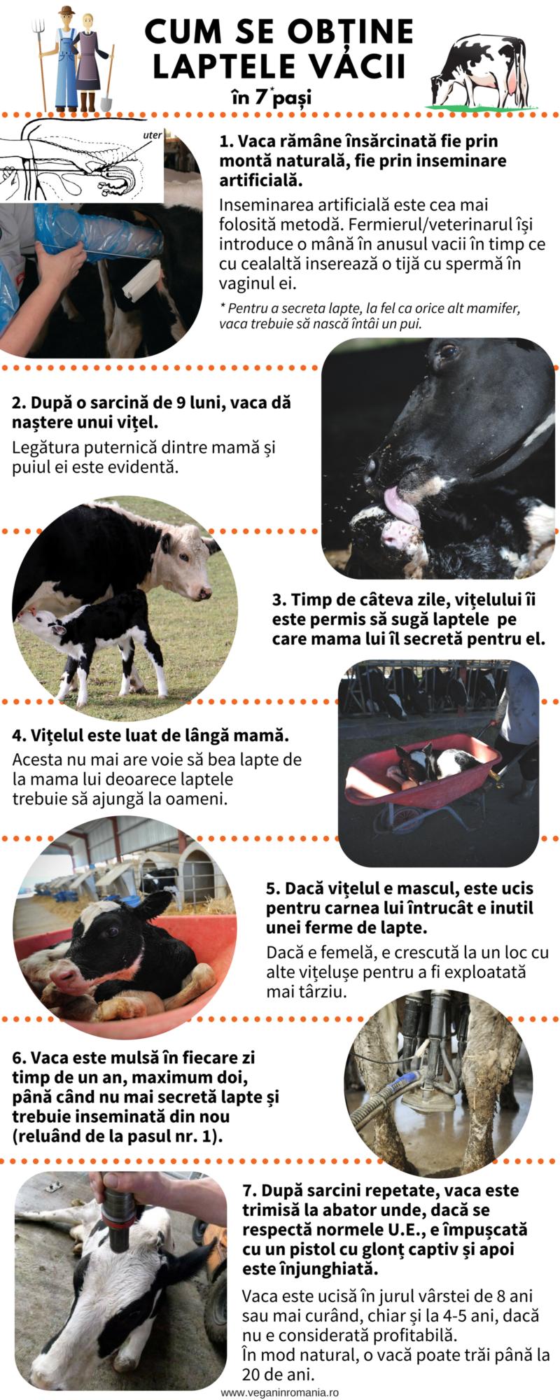 Infografic despre lapte. Surse foto: Jo-Anne McArthur / We Animals; Peter Mazurek