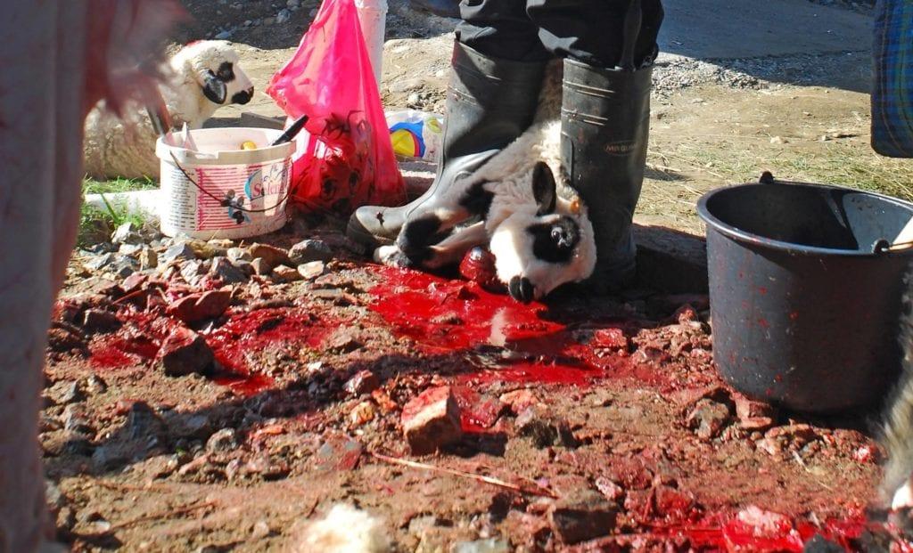 Târg de Paști, România. Un miel este legat și brutalizat înainte să fie ucis pentru a fi consumat la masa de Paști. Foto: Laura Isabela