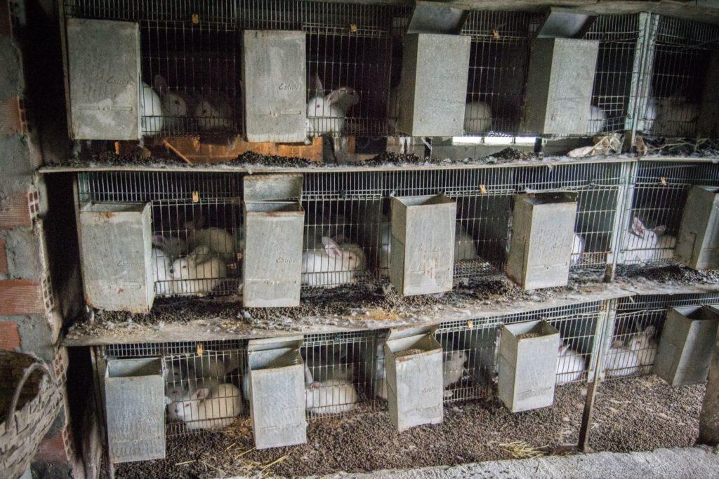 Fermă de iepuri Spania 2013. Foto: Animal Equality